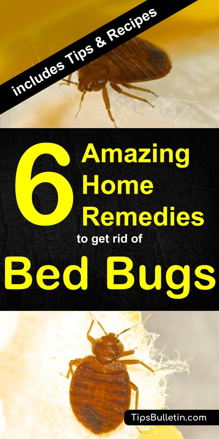 adding bug hour with it by gradually and can baking on bed diy paste to remedy health wash bugs top apply bites soda an for home powder after be the warm then prepared remedies water
