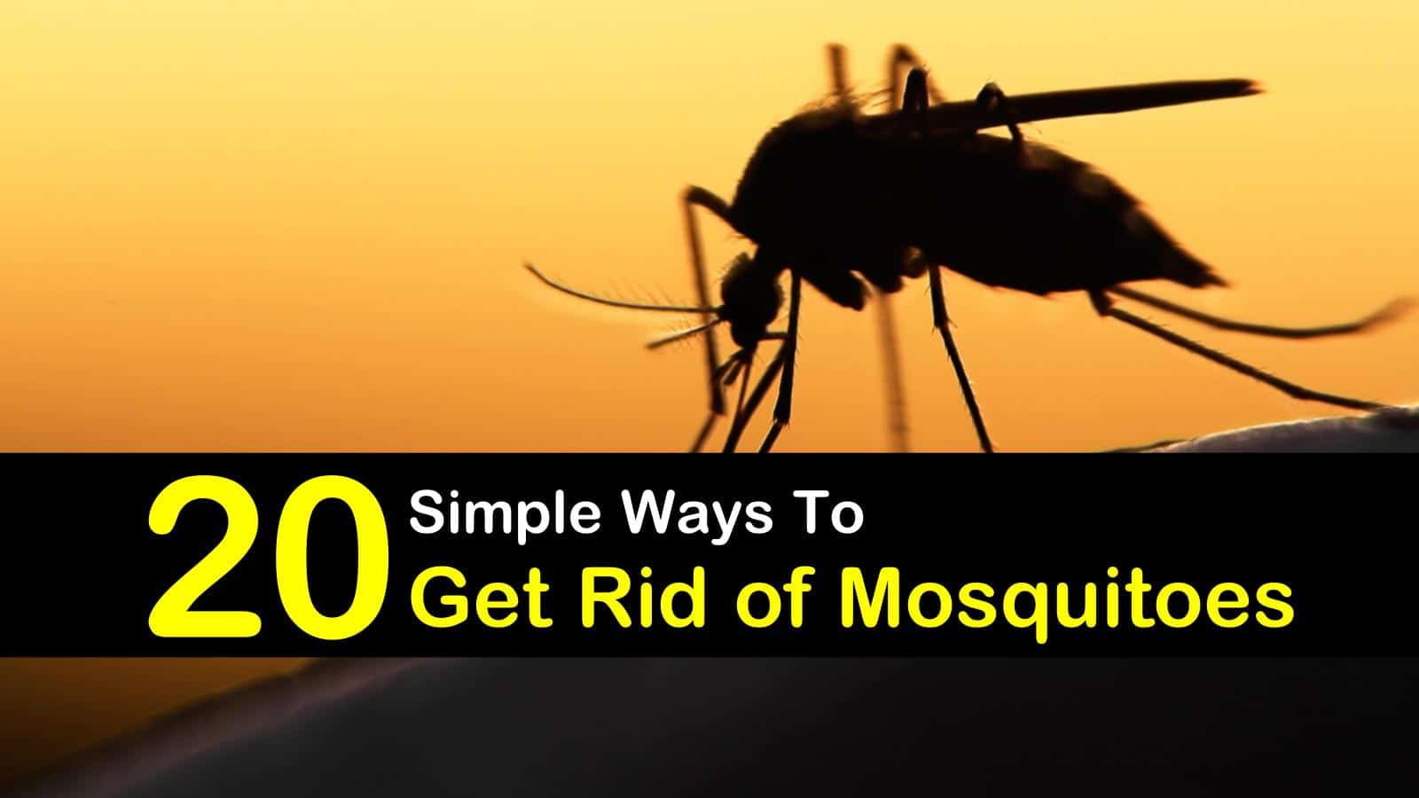 How Can I Get Rid Of Mosquitoes In My House ...