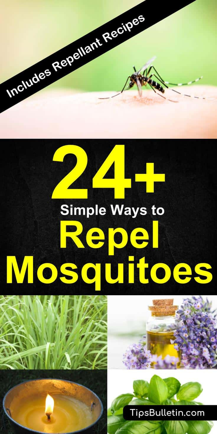 24+ ways to repel mosquitoes at indoors and in your backyard. With tips on how to repel using plants, essential oils, garlic, citronella candles, basil leaves, clove, mint, rosemary, colors including how to make various mosquito repellent sprays.#mosquitoes #repel #howto