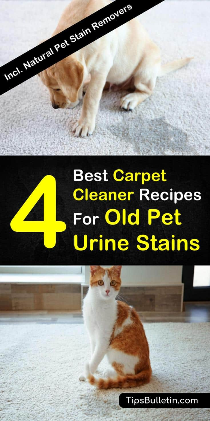 Find the 7 best carpet cleaners for old pet stains. Learn how to remove poop and urine smells from your carpet, rugs and upholstery using ingredients like baking soda, essential oils, and white vinegar. These homemade odor eliminator sprays will help eliminate pet odors from your house. #petstains