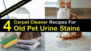 4 Best Carpet Cleaner Recipes For Old Pet Urine Stains titleimg1