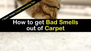 how to get bad smells out of carpet titlimg