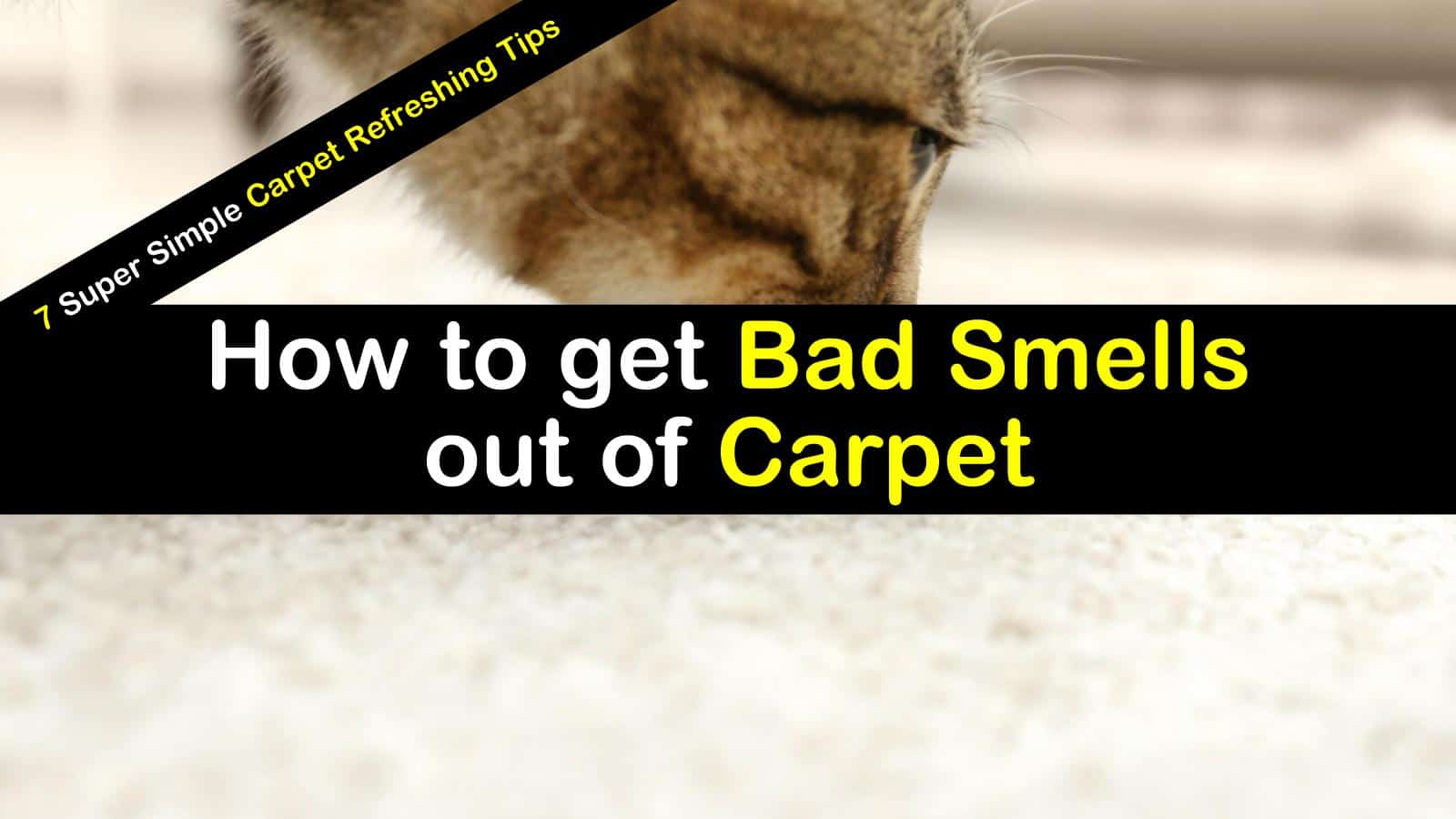 How To Get Bad Smells And Odors Out Of Carpet 7 Carpet