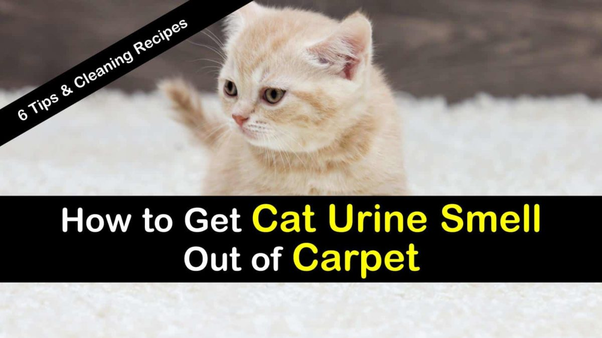 6 Clever Ways To Get Urine Smell Out Of Carpet