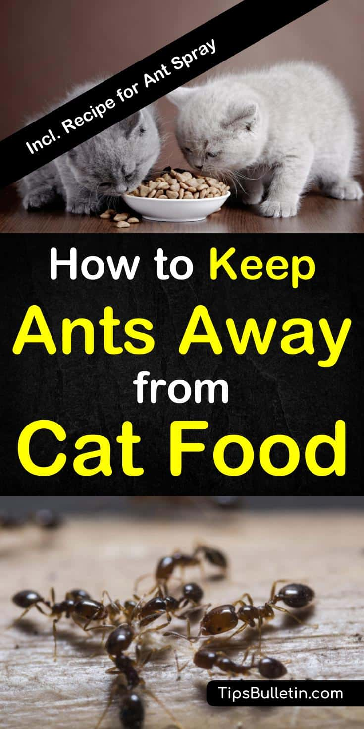 How to keep ants away from cat food, includes tips and recipes to kill and repel ants. Homemade ants spray.#ants #catfood #pestcontrol