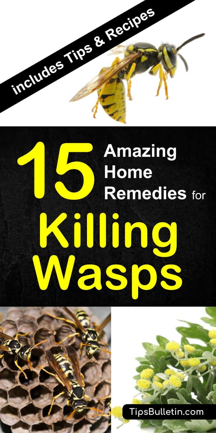 15 home remedies for killing wasps - with detailed tips on how to keep yellow jackets away from your home and repel wasps from nests using a natural remedies and plants. The perfect way to get rid of them using spray, paper bags or other diy methods. #wasps #howtogetrid #pestcontrol #yellowjackets