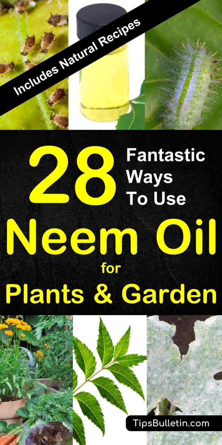 28 ways to use neem oil for plants - including tips and recipes for natural pest control sprays using neem oil on mildew, spider mites, aphids, whiteflies and others.#neemoil #neemoilforplants