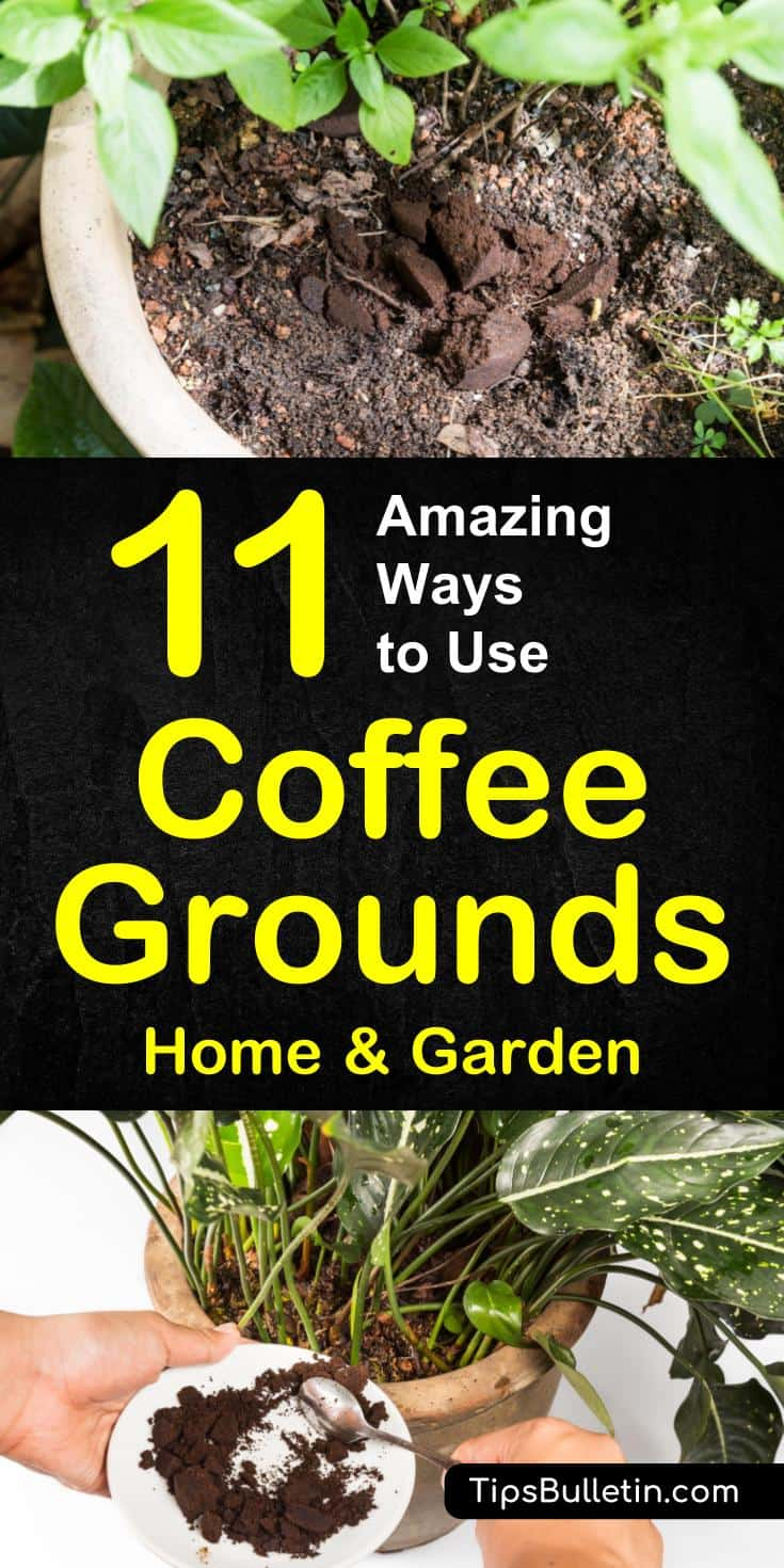 11 ways to use coffee grounds in the garden for How to use coffee grounds in garden