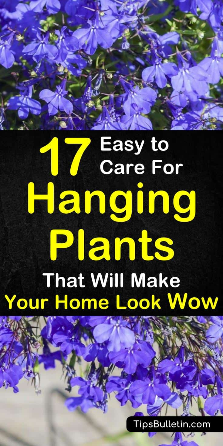 Get a fresh look at your home with these beautiful easy to care for houseplants for your hanging baskets or pots. Ideal for indoor or outdoor, be it in bedroom, bathroom or living room or on your porch, patio or pergola. #housplants #hangingbasket #hangingplants