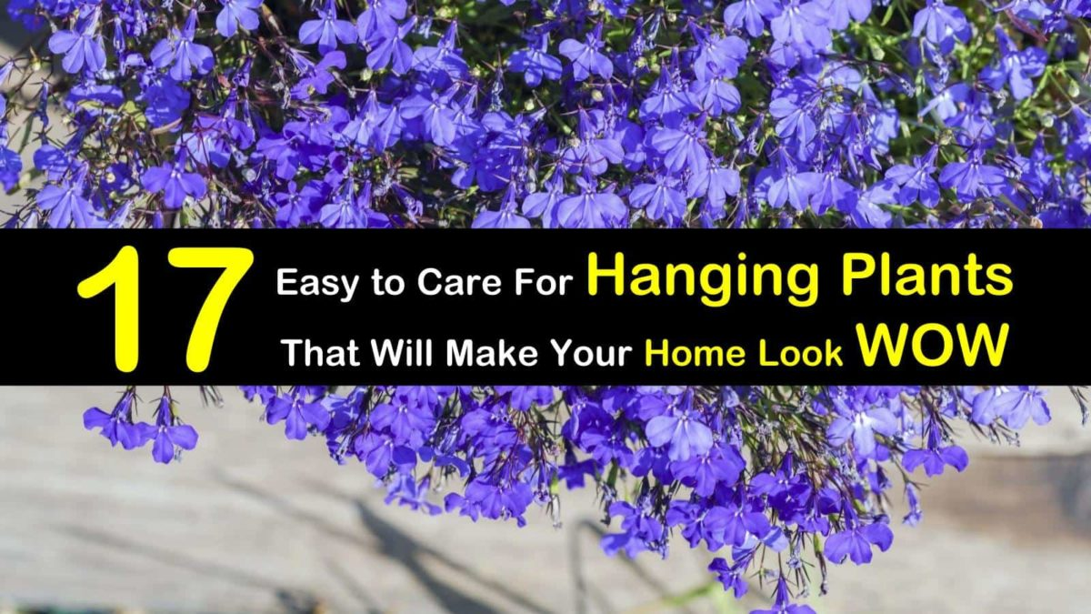 17 Easy to Care For Hanging Plants that will Make Your Home Look Wow