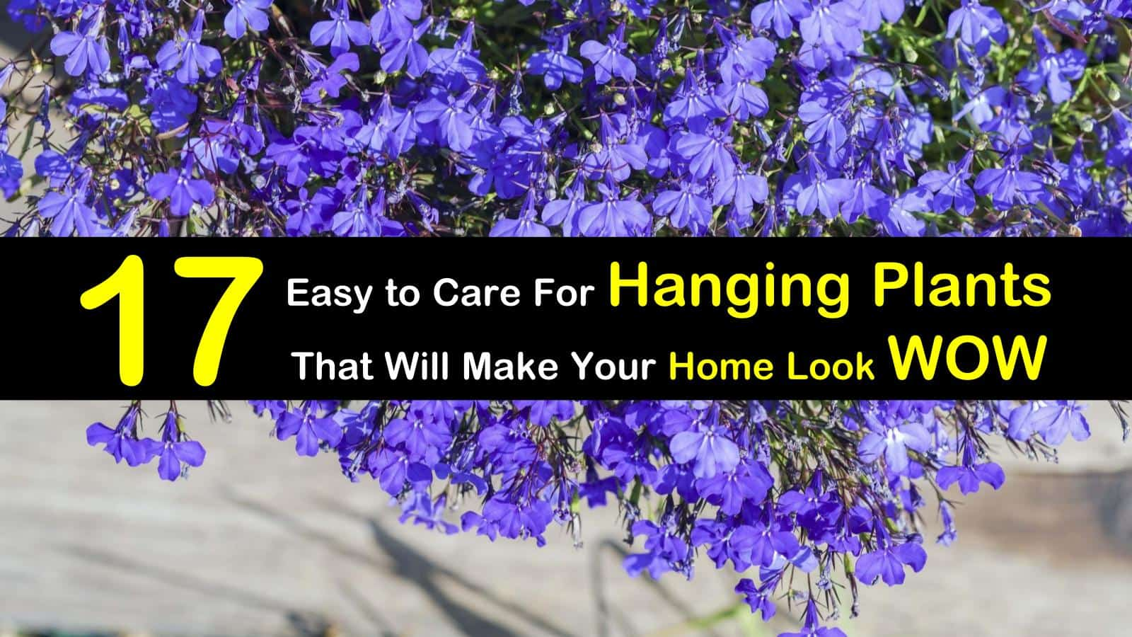 17 easy to care for hanging plants that will make your home look wow 17 hanging plants img izmirmasajfo