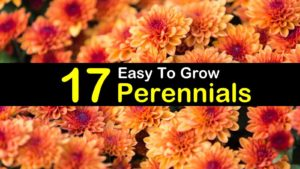 easy to grow perennials titlimg