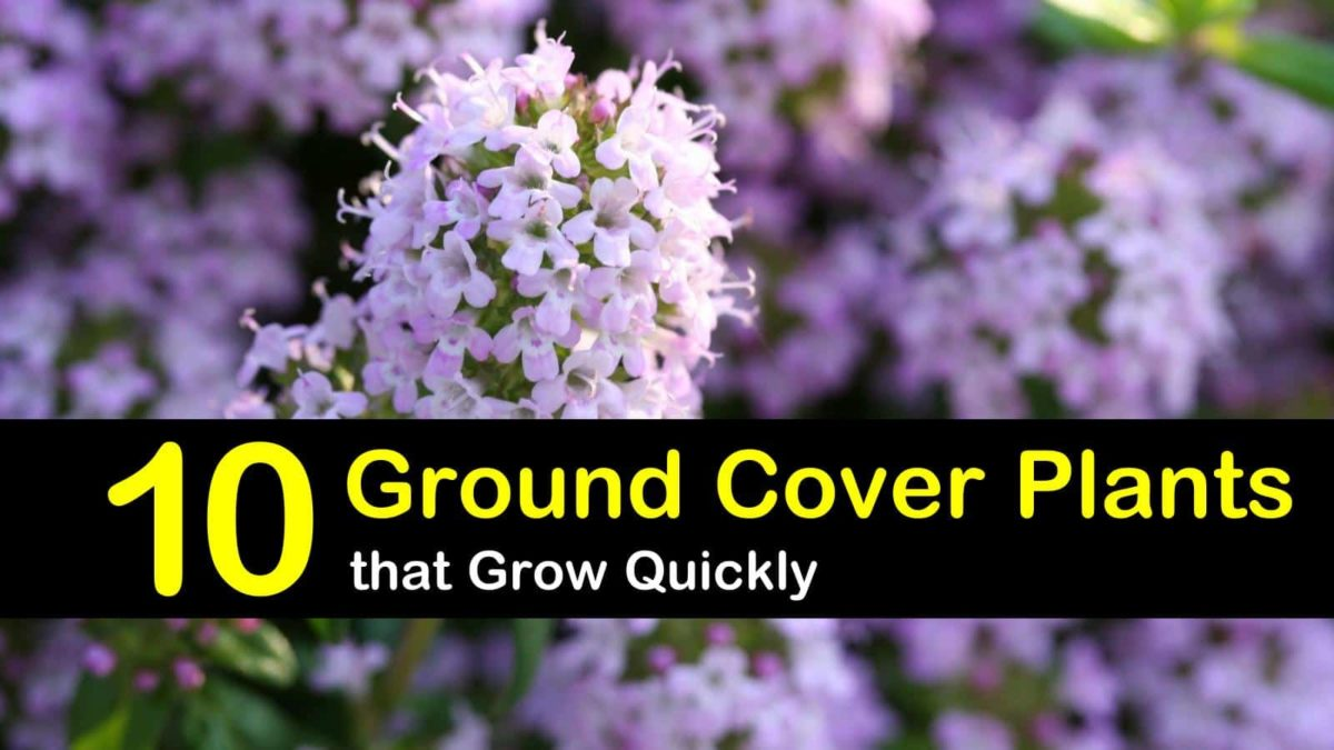 The 10 Best Evergreen Ground Cover Plants that Grow Quickly