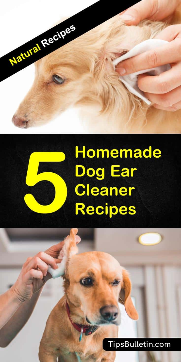 Home Made Dog Ear Cleaning Recipe
