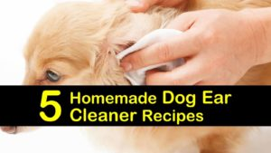 homemade dog ear cleaner titlimg