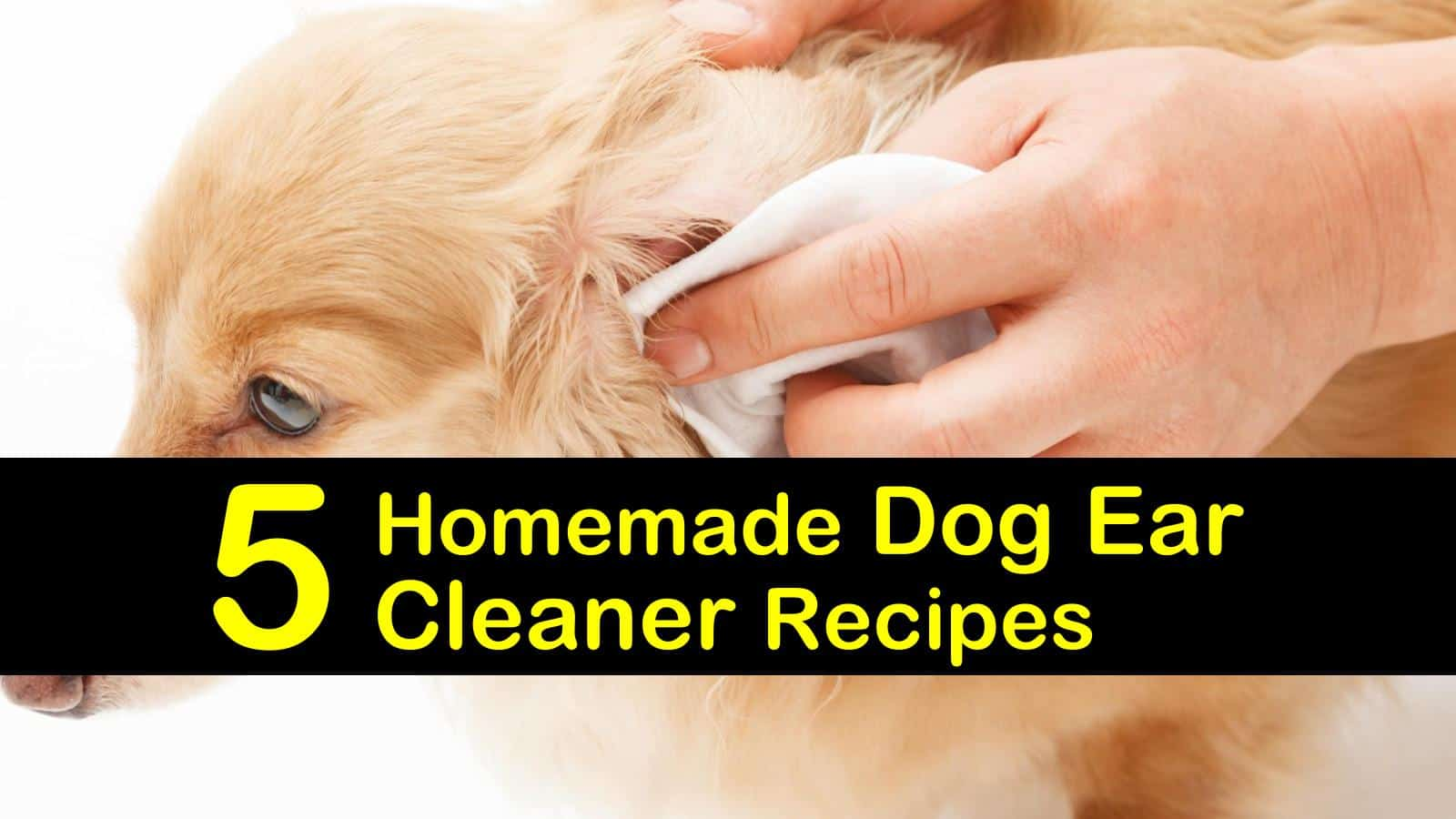 5 Homemade Dog Ear Cleaner Recipes