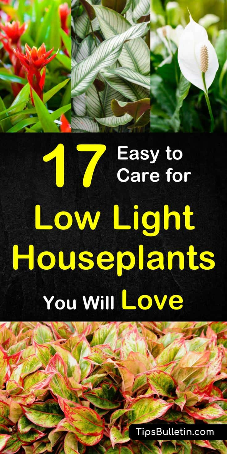 17 easy to care for low light houseplants you will love. Black Bedroom Furniture Sets. Home Design Ideas