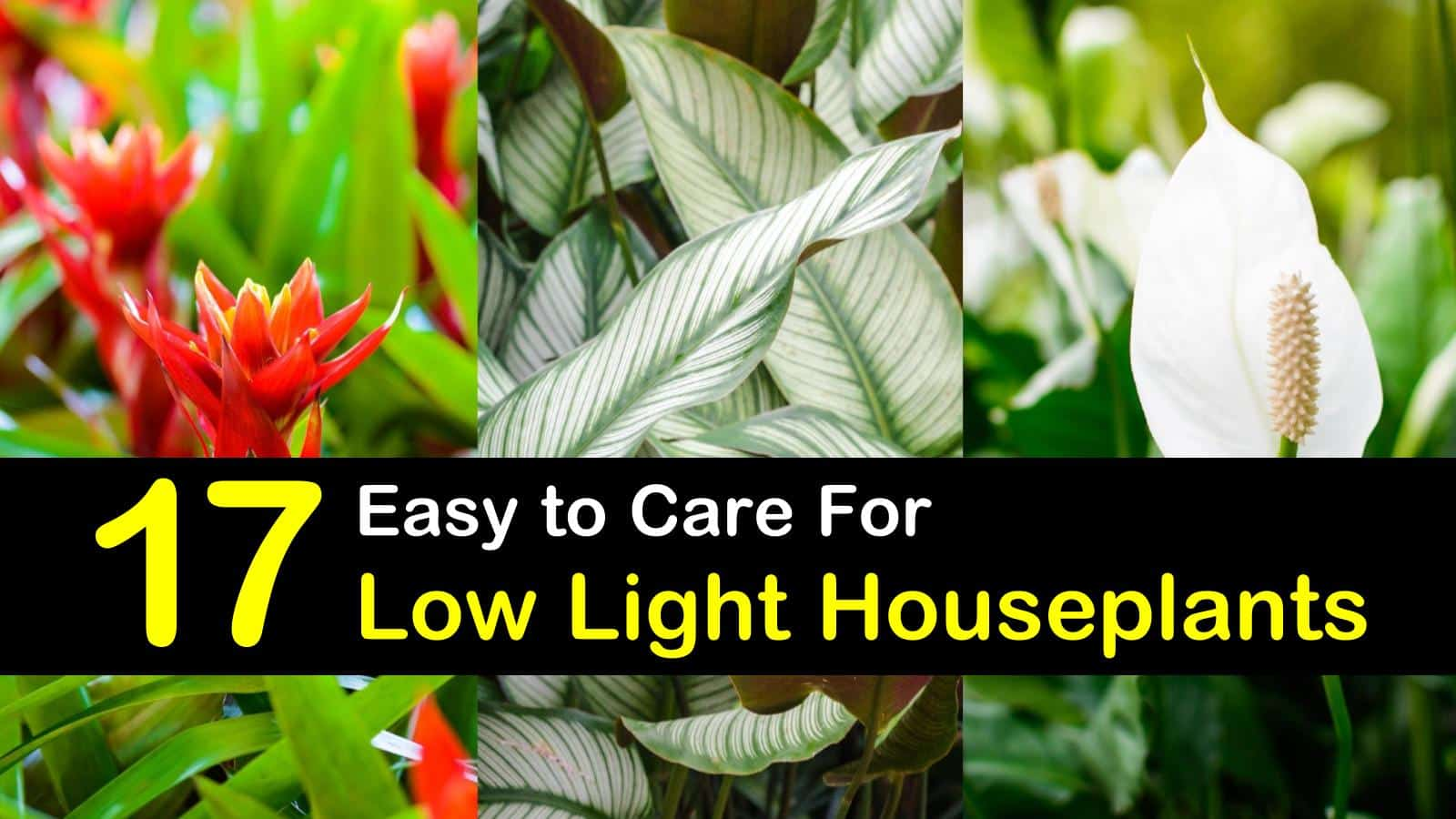 17 easy to care for low light houseplants you will love low light houseplants titlimg1 izmirmasajfo