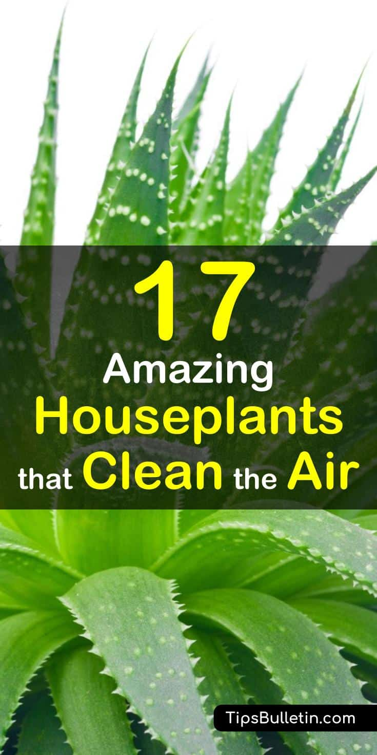 The best house plants that actually purify the air and are very low maintenance. Ranging from peace lily, bamboo palm to aloe vera plants, most of these are low light easy-to-care-for houseplants. They help to clean indoor air and filter harmful toxins.#plants #houseplants #cleanair