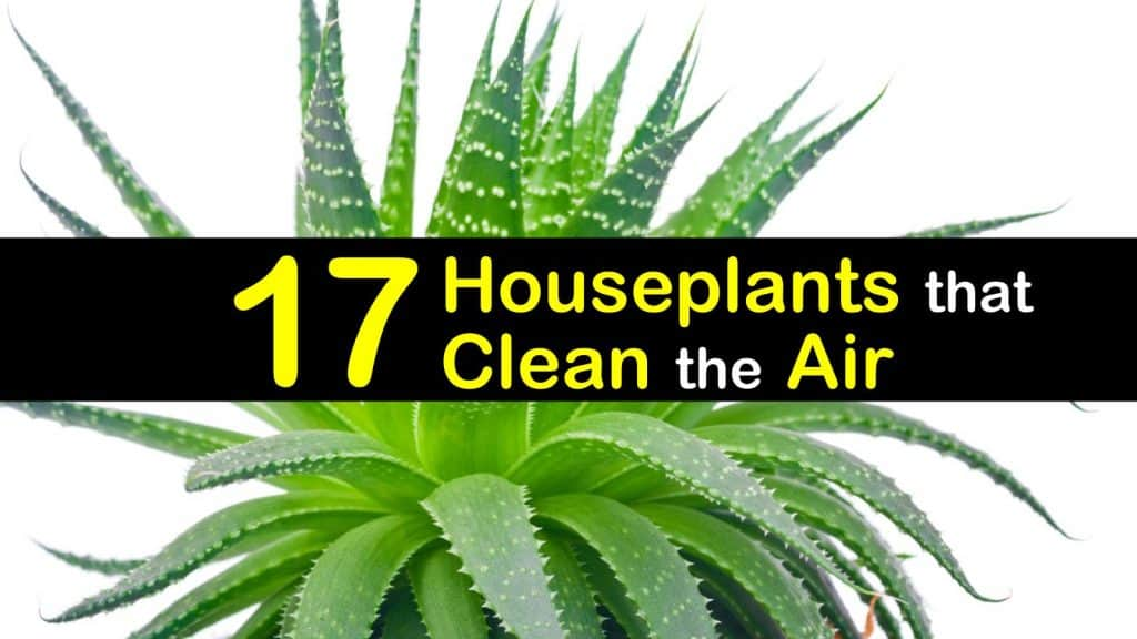 17 Amazing Houseplants That Clean The Air