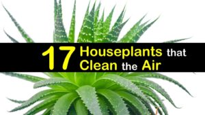 plants-that-clean-the-air-t1