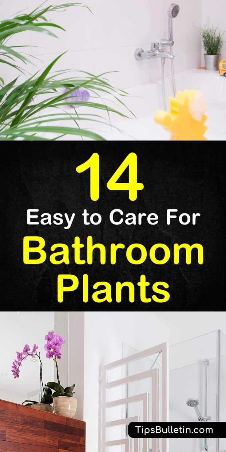 14 Easy to Care For Bathroom Plants
