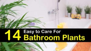 bathroom plants titleimg1