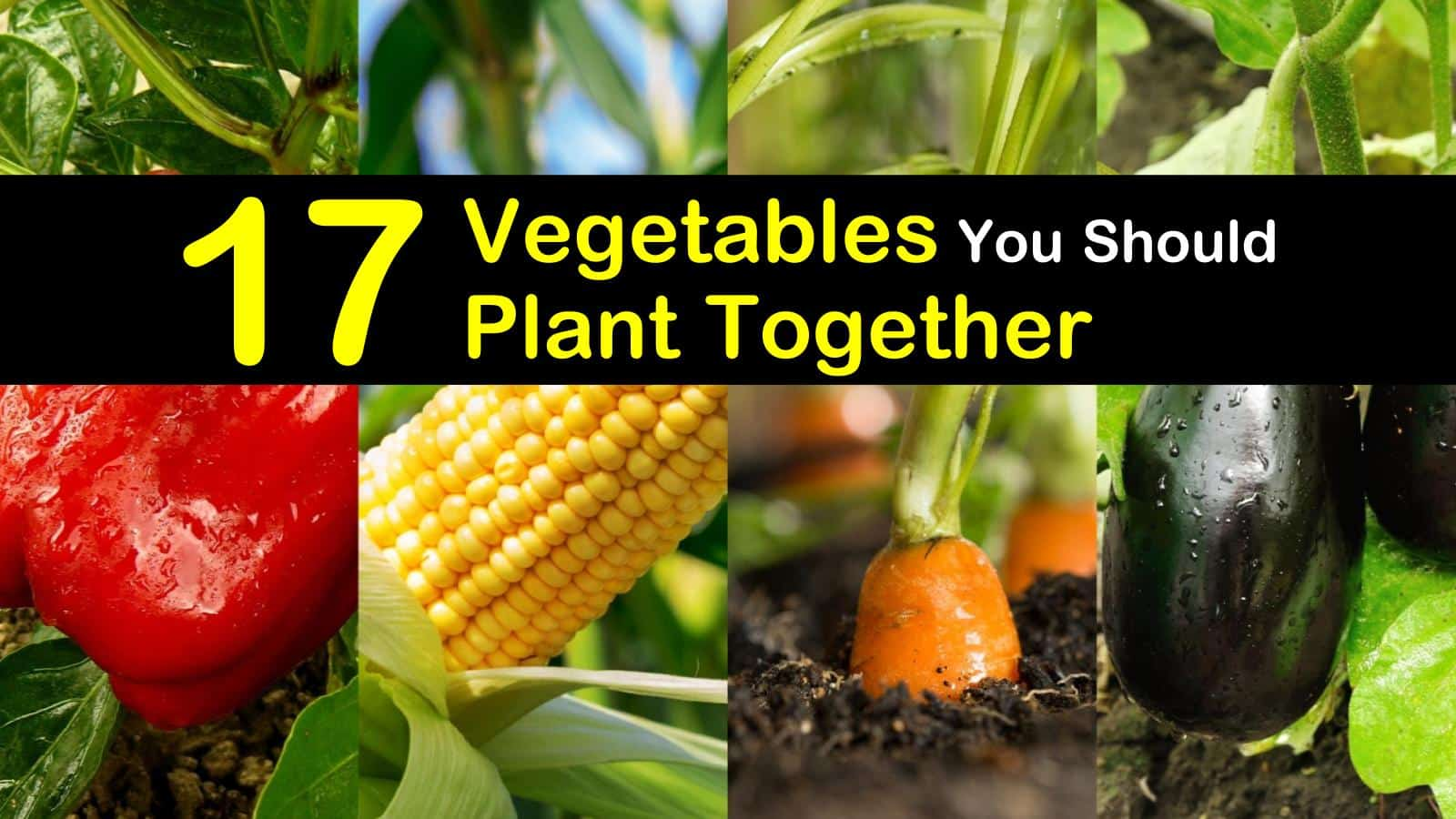 companion planting guide 17 vegetables you should plant together