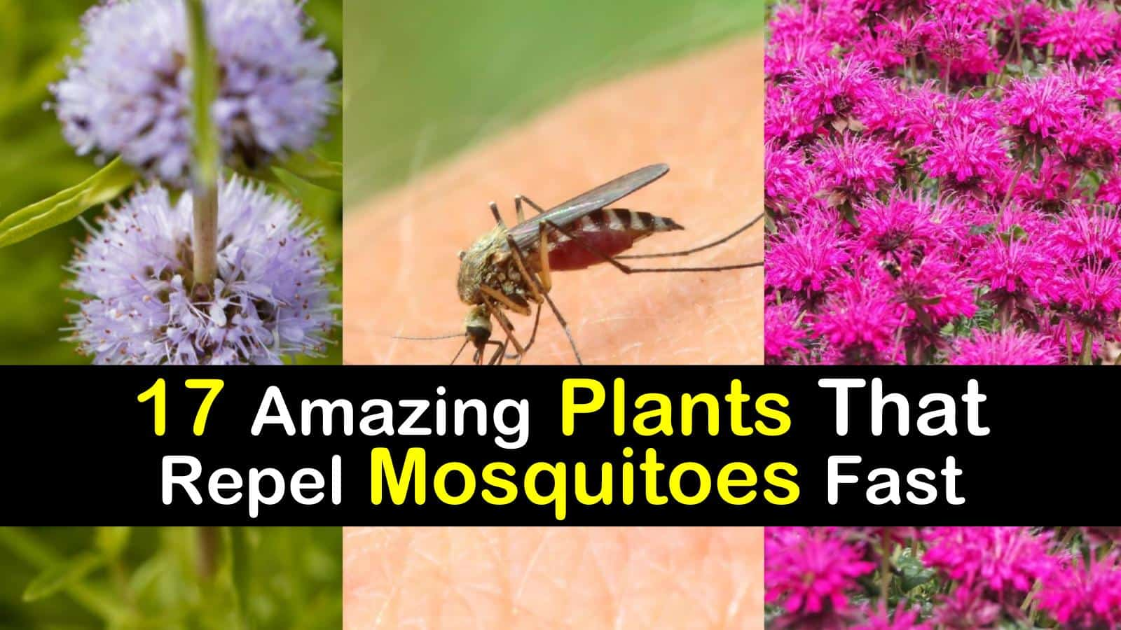 plants that repel mosquitoes titilimg1
