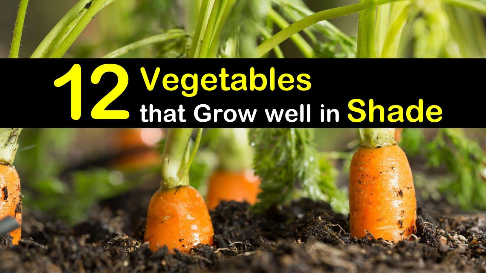 vegetables that grow well in shade titilimg