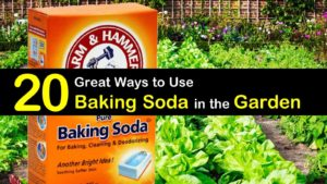 baking soda in the garden titleimg