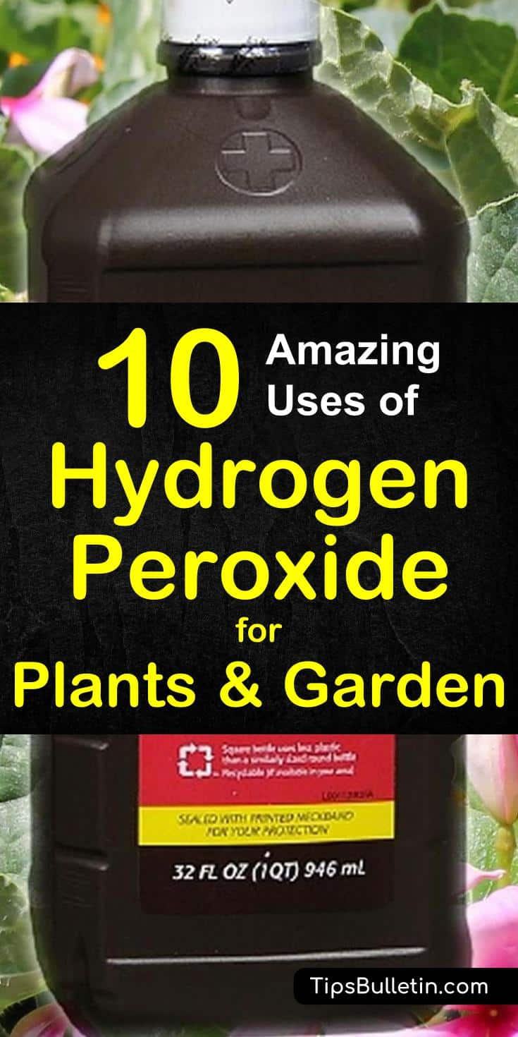 Find out how to best use hydrogen peroxide for plants and in your garden. Includes recipes to fight fungal infections, sanitize seeds, accelerate seed germination, fertilize your plants and using peroxide to keep pests away. #hydrogen #peroxide #plants #garden #pestcontrol