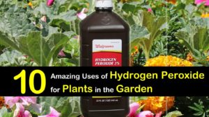 hydrogen peroxide for plants and garden titlimg