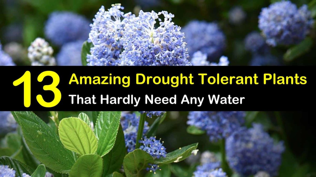 13 Amazing Drought Tolerant Plants that Hardly Need Any Water