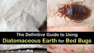 diatomaceous earth for bed bugs titlimg1