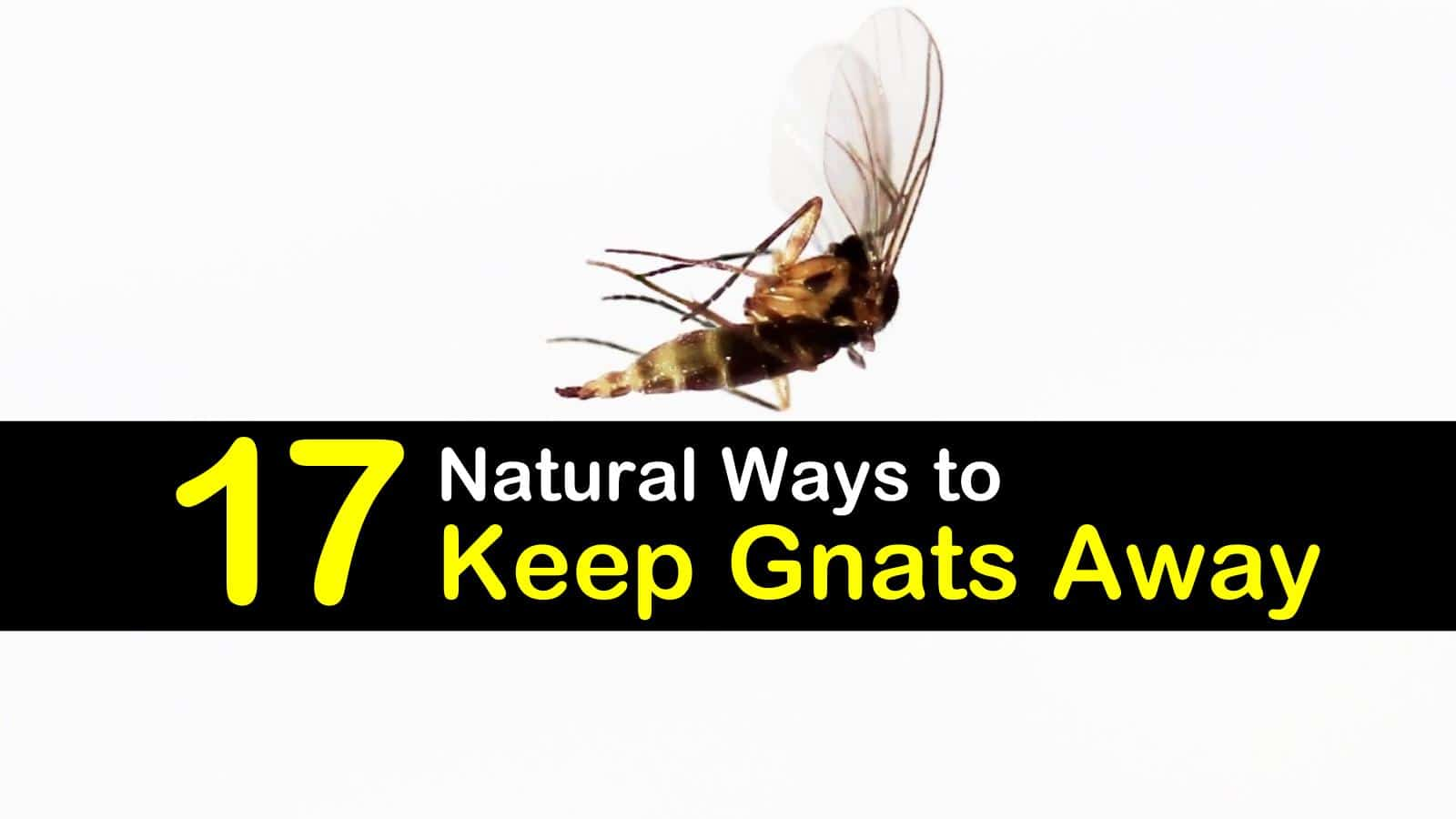 17 Natural Ways to Keep Gnats Away