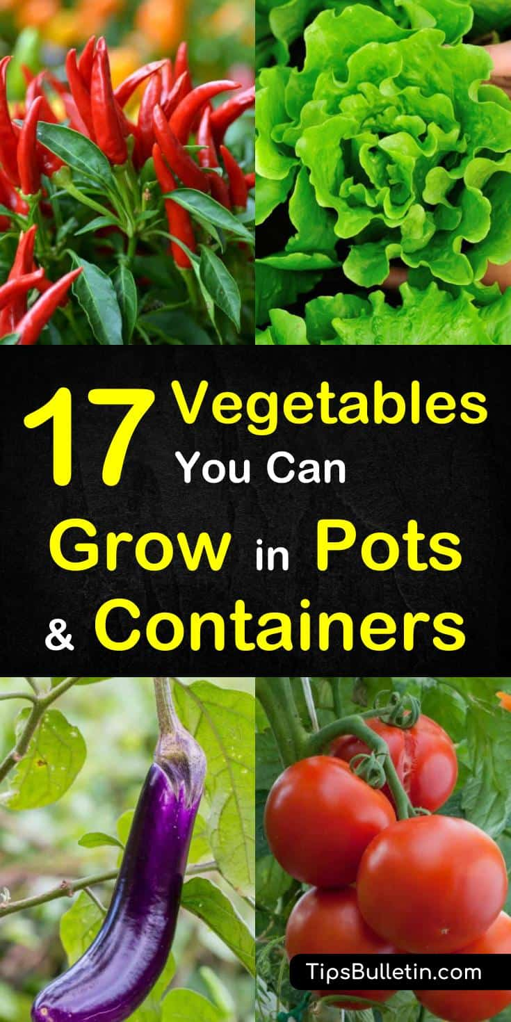 Discover 17 vegetables to grow in pots and containers. Whether dealing with small spaces, or tiny balconies you can learn how to grow veggies and other plants in buckets, pots, and planters. These cheap design ideas will let you have veggies year-round. #growinpots #containergardening #howtogrow
