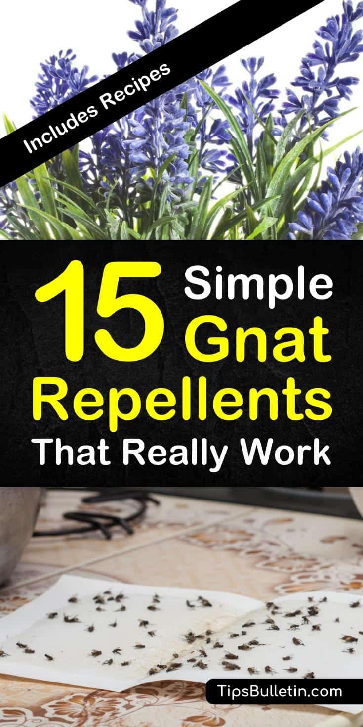 Discover 15 simple homemade gnat repellents that really work. Keep gnats away indoor and outdoor with simple ingredients like vinegar and essential oils. Make a variety of DIY pest control sprays that are safe for kids. #gnatrepellent #repelgnats #gnatsprays #killgnats