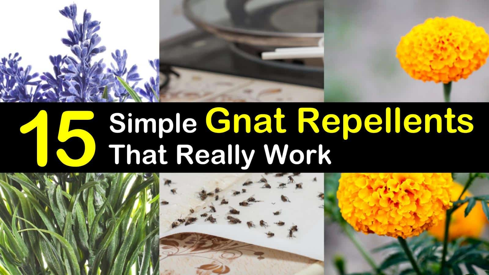 15 Simple Gnat Repellents That Really Work titlimg1