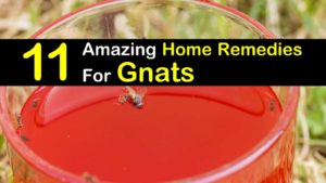 Amazing Home Remedies for Gnats titleimg1