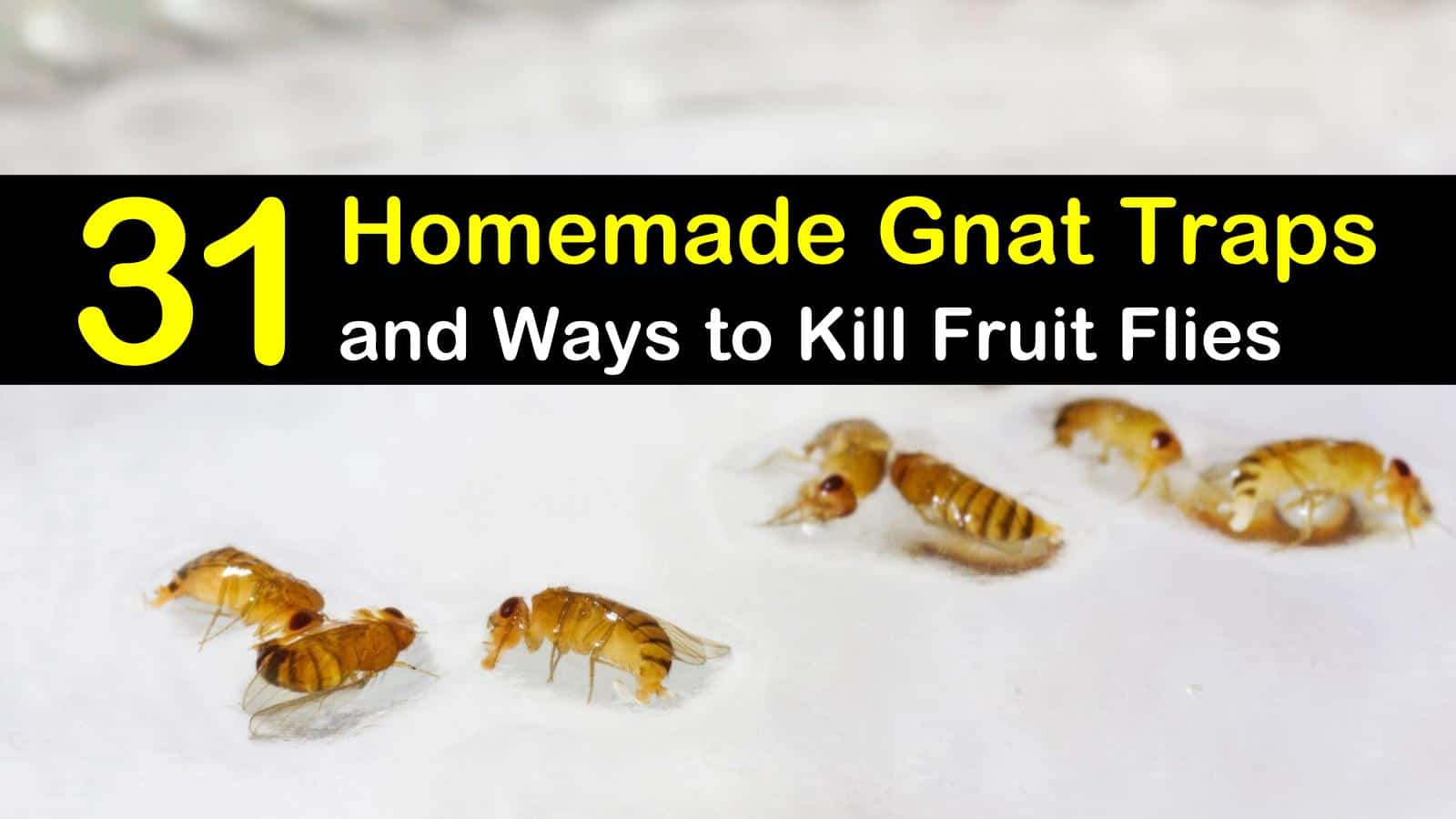 31 Homemade Gnat Traps And Ways To Kill Fruit Flies