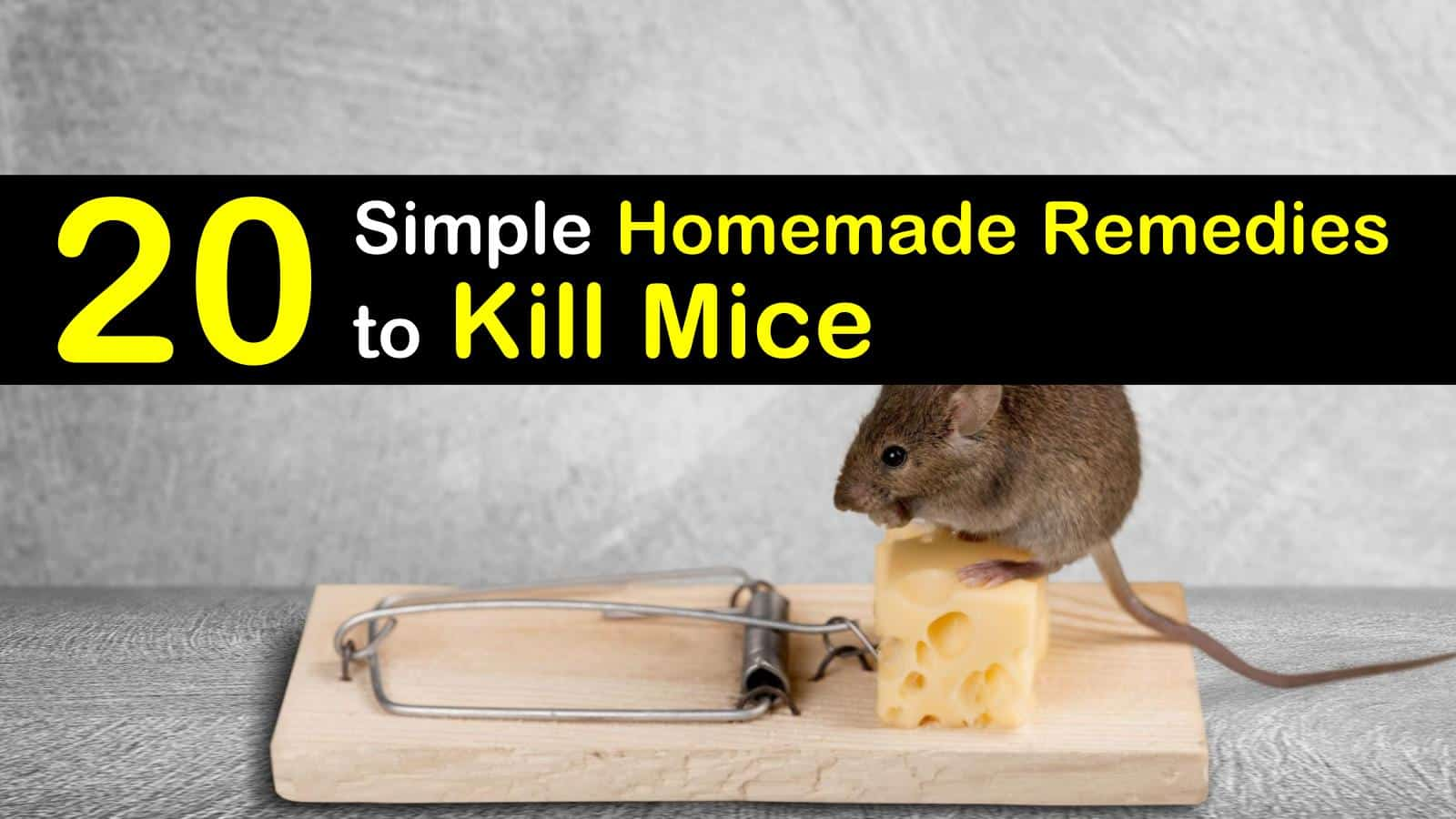20 Simple Homemade Remedies to Kill Mice titleimg1