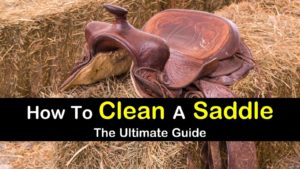 How To Clean A Saddle titleimg1