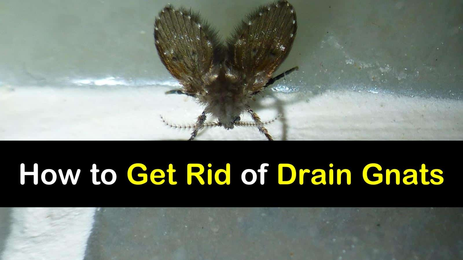 How to Get Rid of Drain Gnats titleimg1