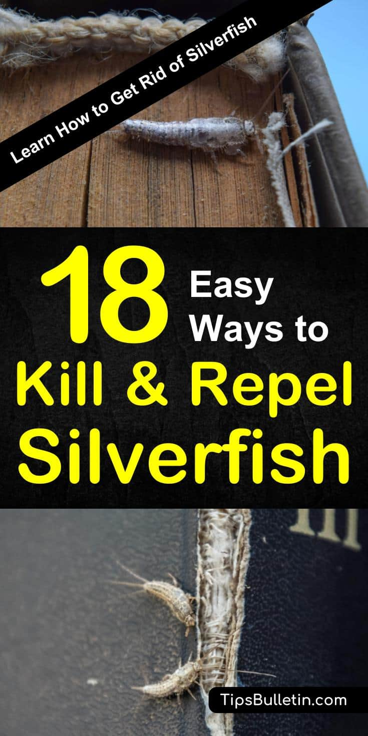 Discover how to get rid of silverfish with easy pest control remedies using natural ingredients. Kill and repel these wingless insects with naturally occurring products like diatomaceous earth, baking soda, and essential oils. #killsilverfishnaturally #silverfishrepellent #getridofsilverfish