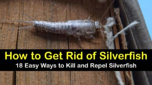 18 Easy Ways to Kill and Repel Silverfish titleimg1