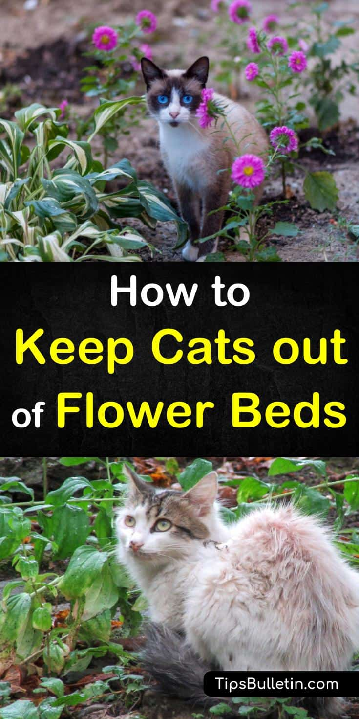 Tips and tricks for how to keep cats out of flower beds. Don't let neighborhood cats turn your gardens into a litter box, learn how to get rid of cats and other pets with natural remedies. Use products like chicken wire, plants or a fence to keep cats out. #cats #keepcatsout #garden