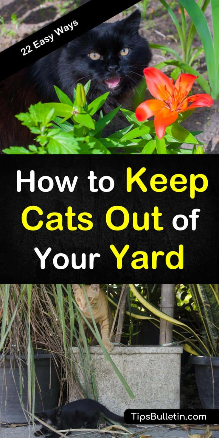 Discover 22 ways to keep cats out of your yard using plants and natural remedies. Find out how to get rid of cats using these methods for keeping yards and gardens from becoming a personal litter box. These DIY solutions will keep cats out of backyards. #repelcats #keepcatsout #cats