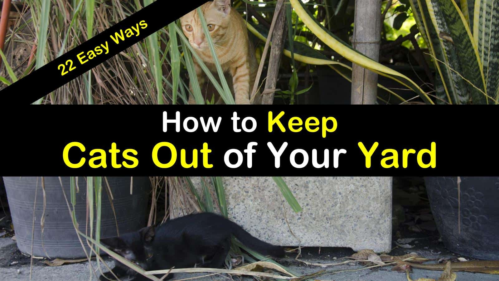 How to Keep Cats Out of Your Yard titleimg1