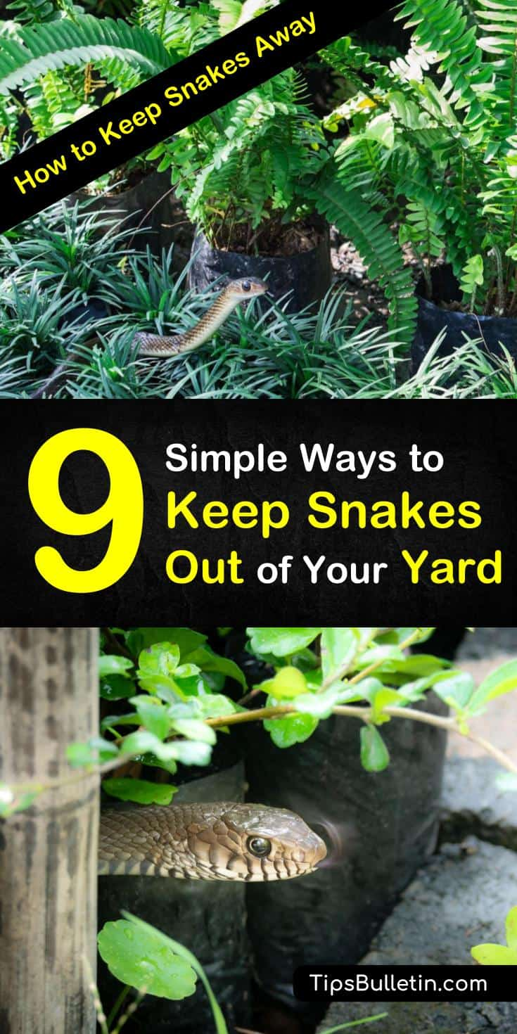 9 ways to keep snakes away from house and backyards. Learn how to make snake repellent using essential oils and other simple ingredients you can find in your house. Learn how to get rid of snakes and keep gardens and yards snake free all summer long. #keepsnakesaway #snakes #DIYsnakerepellents
